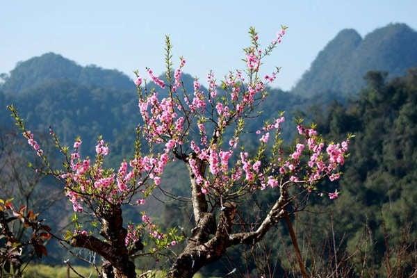پیش بینی آب و هوا برای سال جدید قمری 2021 را به روز کنید: جنوب گرم است ، شمال در آخرین روزهای دسامبر رگبار ، رگبار ، تگرگ 1