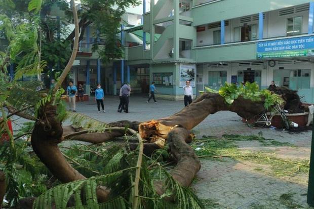 Nam sinh bật khóc khi nghe thấy bạn cùng lớp đã tử vong vì cây đổ 3
