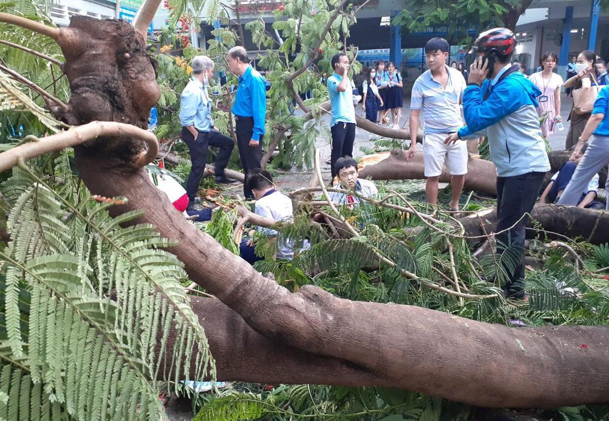 Hai học sinh bị thương nặng trong vụ cây phượng bật gốc đã hồi tỉnh  1