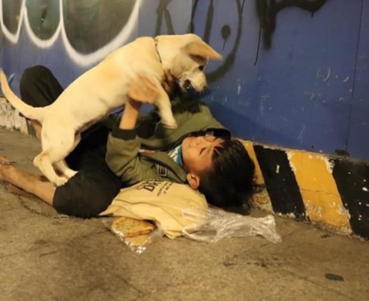 گدا در گوشه ای از شب سال نو نشست و سگ خانگی اش را محکم بغل کرد: