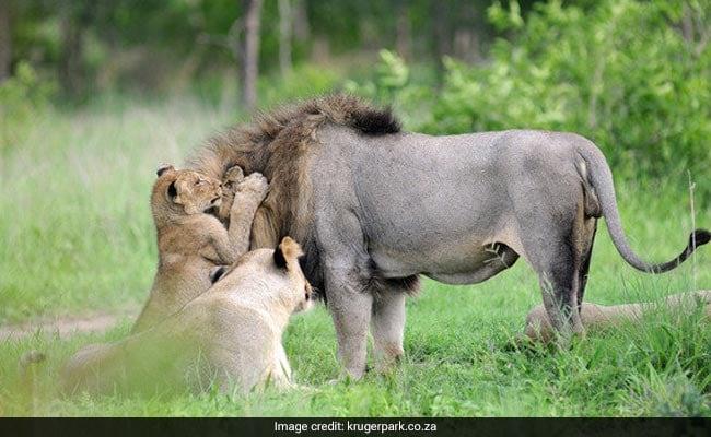 Nghi phạm săn trộm tê giác bị voi, sư tử cắn chết 1