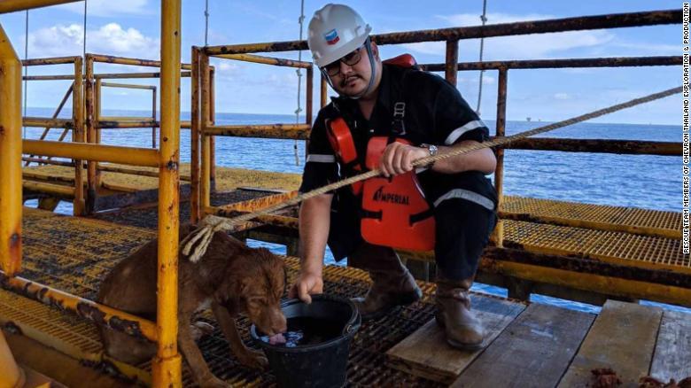 Giải cứu chú chó bơi hơn 200km giữa đại dương 1