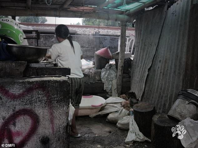 Đột nhập lò mổ chó kinh hoàng nhất Indonesia 4