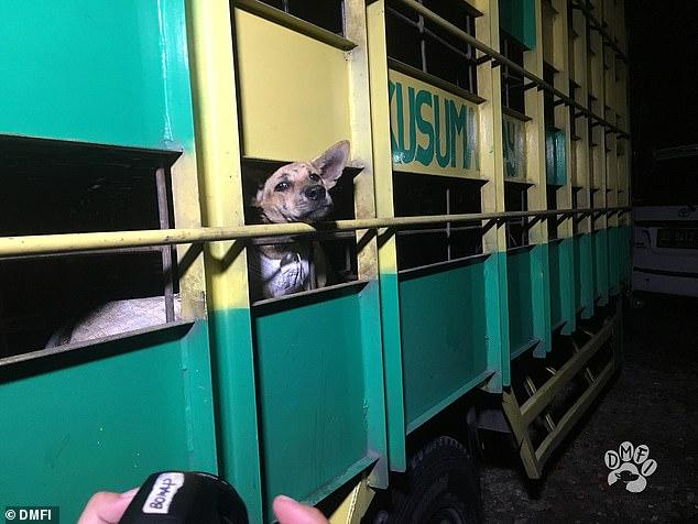 Đột nhập lò mổ chó kinh hoàng nhất Indonesia 7