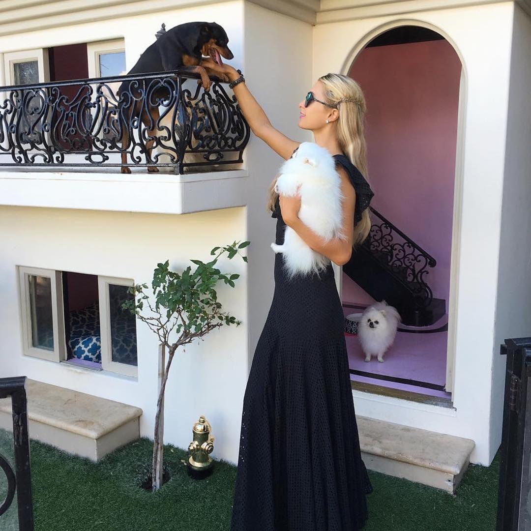 Biệt thự 352.000 USD dành cho chó đẹp đến nín thở của Paris Hilton 1