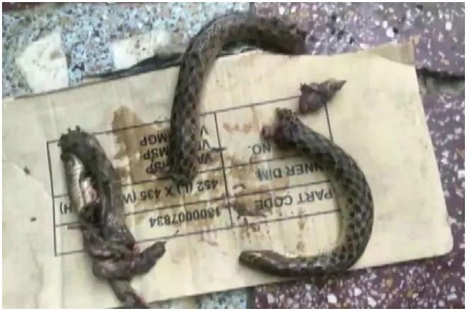 Bị rắn cắn, ma men cắn lại rắn để trả thù 2