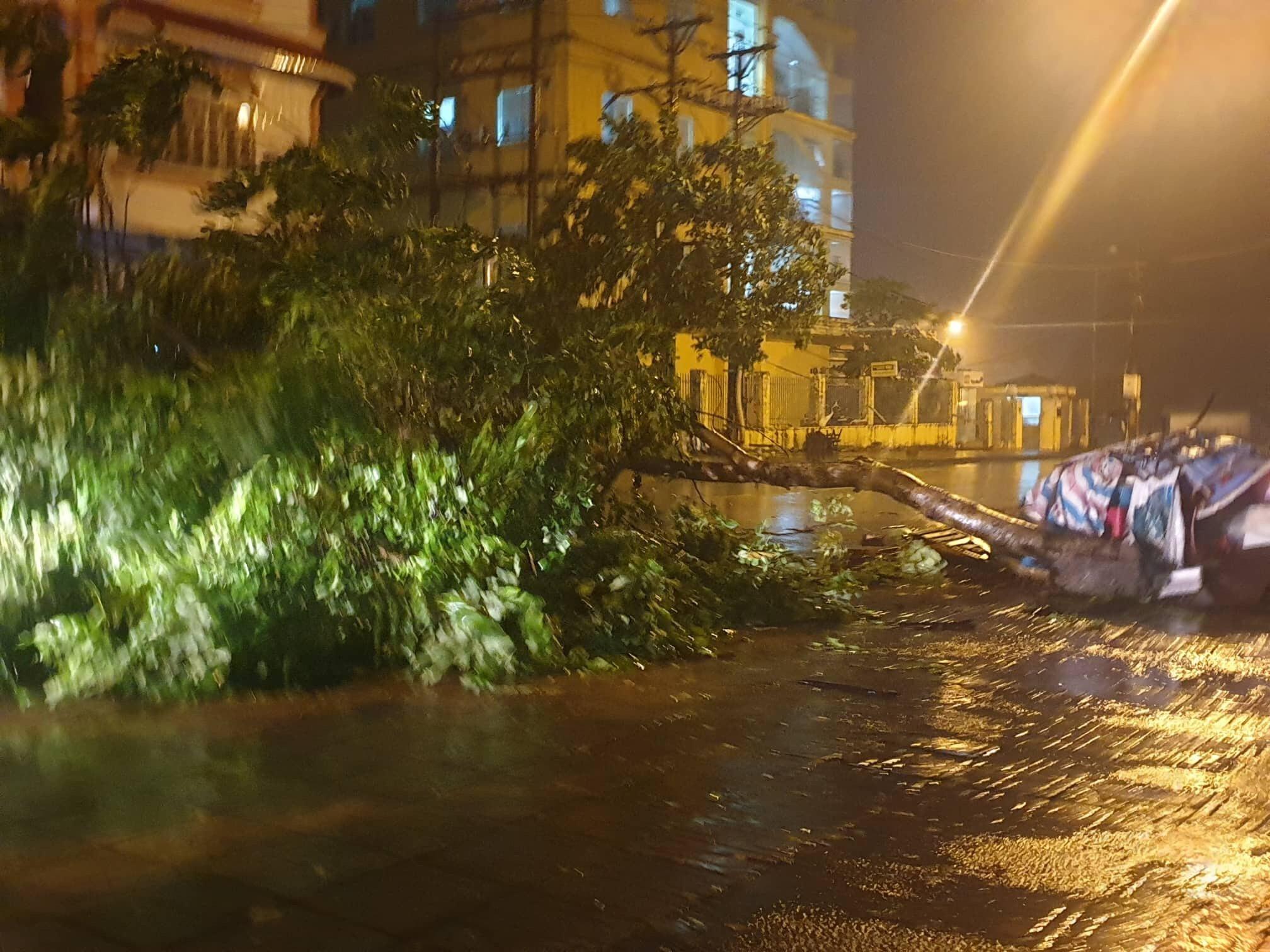 Ảnh hưởng bão số 3: Cây đổ ngổn ngang ở Hà Nội, Quảng Ninh, Hải Phòng 3