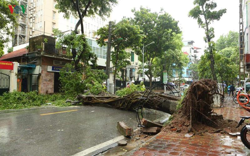 Ảnh hưởng bão số 3: Cây đổ ngổn ngang ở Hà Nội, Quảng Ninh, Hải Phòng 9