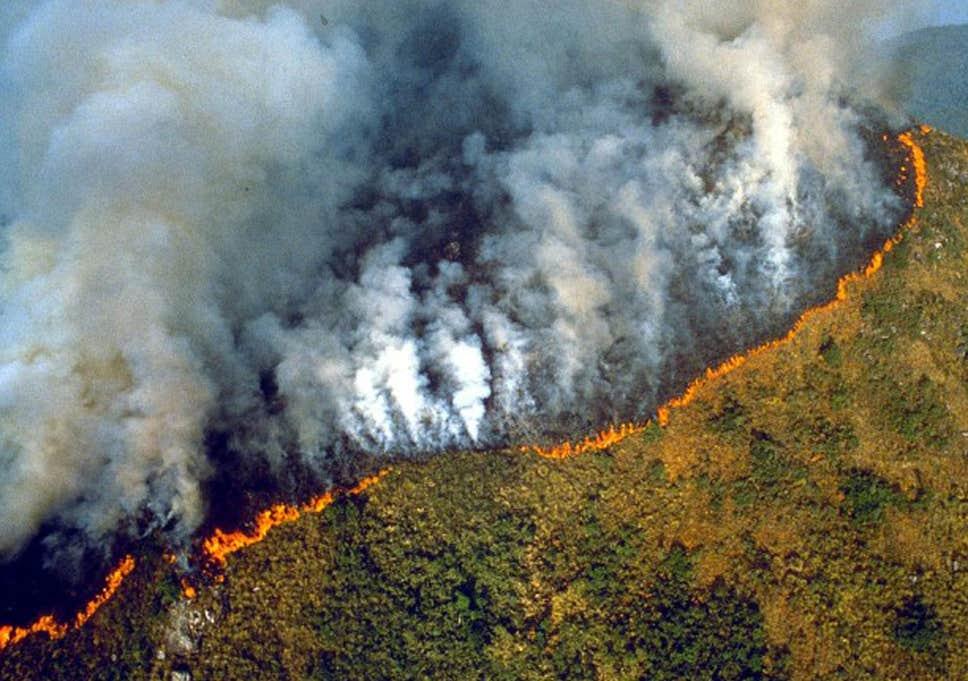 Cháy rừng Amazon gây khủng hoảng toàn  cầu 2