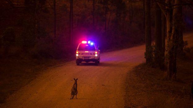 Gần nửa tỷ động vật chết do cháy rừng, xác nằm la liệt gây ám ảnh tại Úc 12
