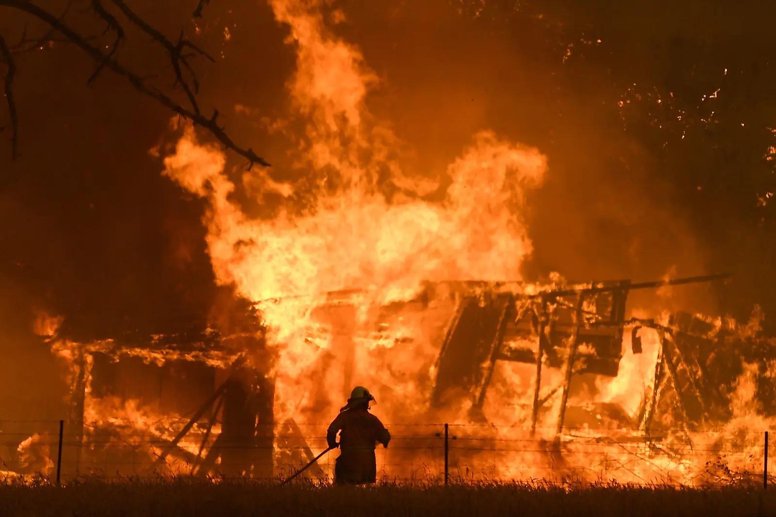 Gần nửa tỷ động vật chết do cháy rừng, xác nằm la liệt gây ám ảnh tại Úc 9