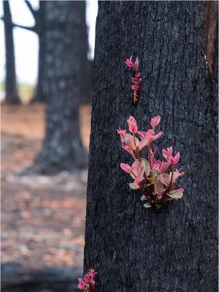 Những bức ảnh hậu cháy rừng Australia gây sốt vì quá đẹp 2