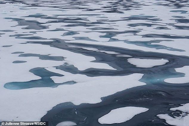 Băng Bắc Cực có thể bị xóa sổ vào năm 2035 3