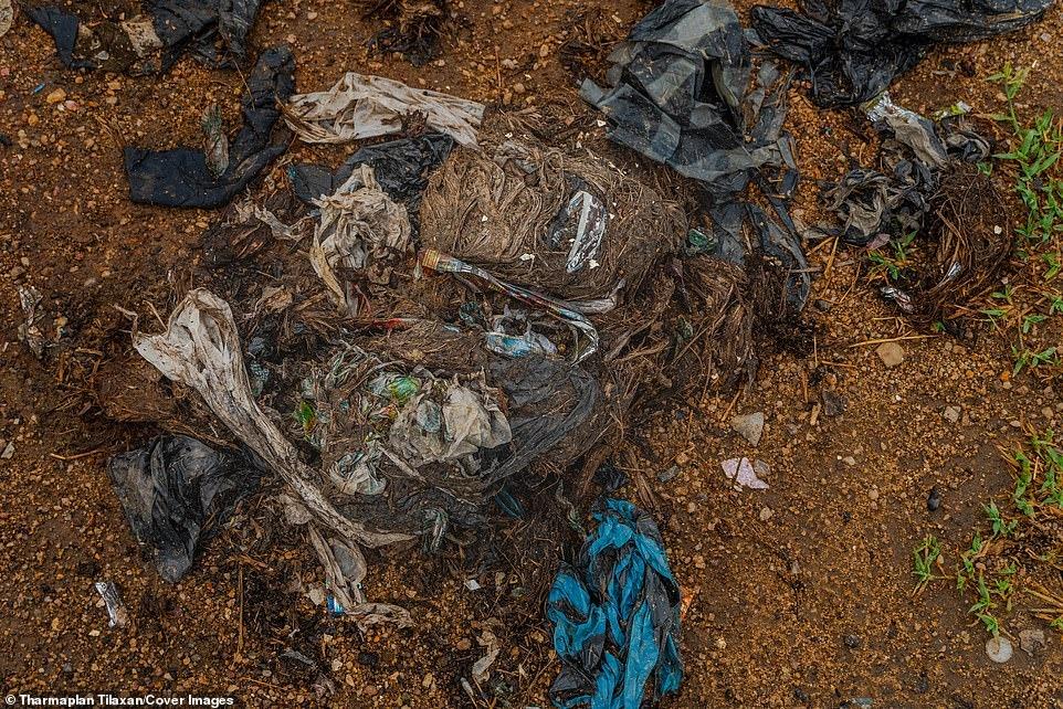 Đau lòng cảnh đàn voi rừng sục sạo khắp bãi rác kiếm ăn, dạ dày toàn nhựa không thể tiêu hóa 11
