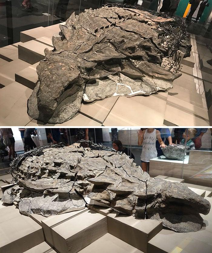 10 hóa thạch cổ đại khiến ai nhìn vào cũng phải thốt lên 'Ơ mây zing, gút chóp' 2