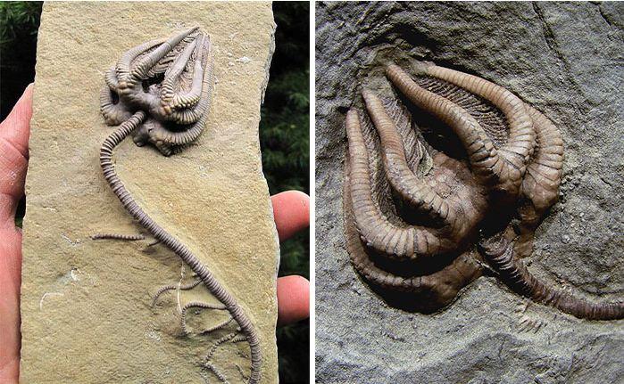 10 hóa thạch cổ đại khiến ai nhìn vào cũng phải thốt lên 'Ơ mây zing, gút chóp' 7