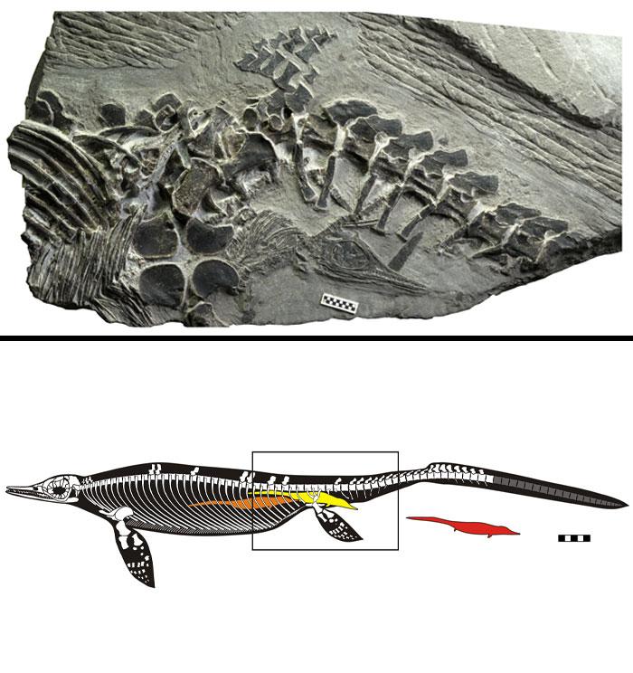 10 hóa thạch cổ đại khiến ai nhìn vào cũng phải thốt lên 'Ơ mây zing, gút chóp' 9