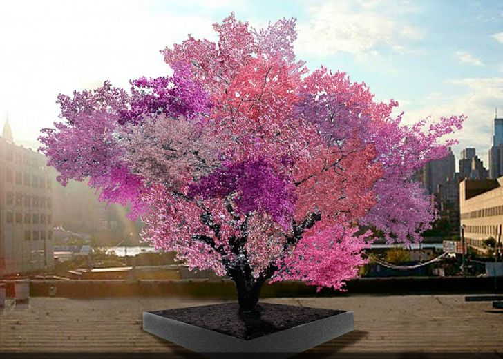 15 گونه درخت زیبا 15 را مشاهده کنید