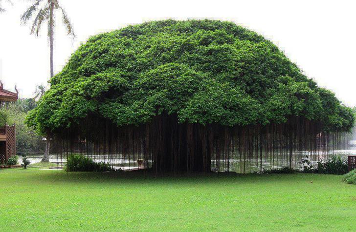 15 گونه درخت زیبا در جهان را ببینید 4