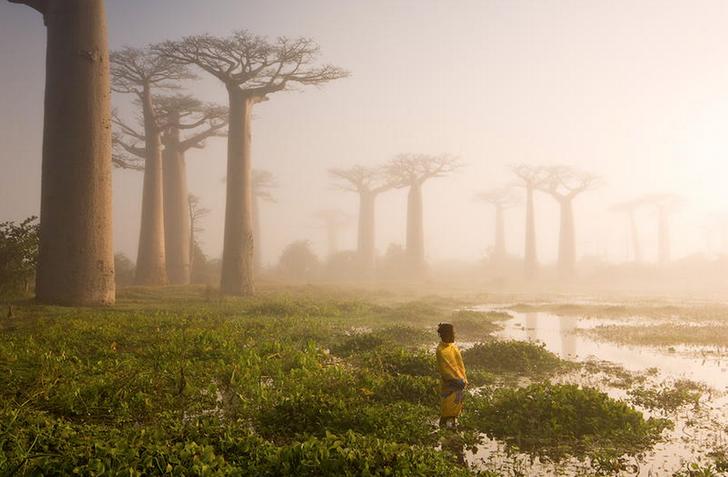15 گونه درخت زیبا در جهان را مشاهده کنید 6