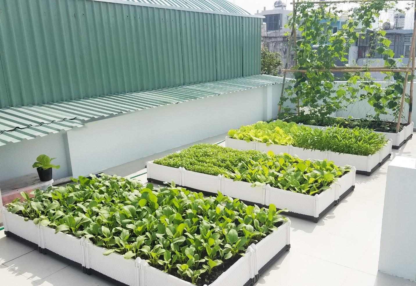 Xu hướng mô hình trồng rau sạch tại nhà có thật sự hiệu quả? 3
