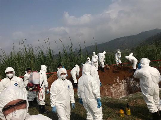 Nóng: Hà Nội phát hiện thêm 3 quận, huyện có ổ dịch tả lợn châu Phi 1