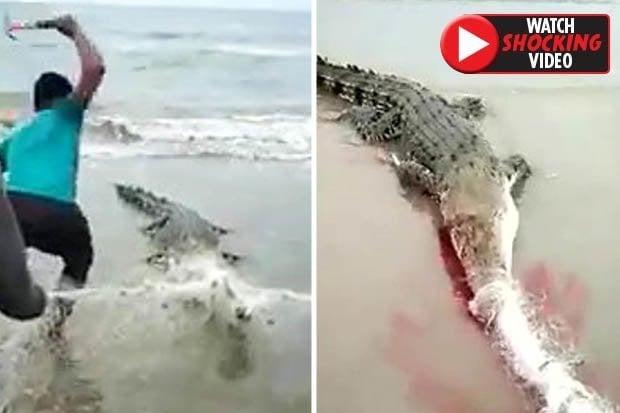 Giật mình thon thót cảnh người đàn ông dùng búa đập chết cá sấu dạt bờ 1