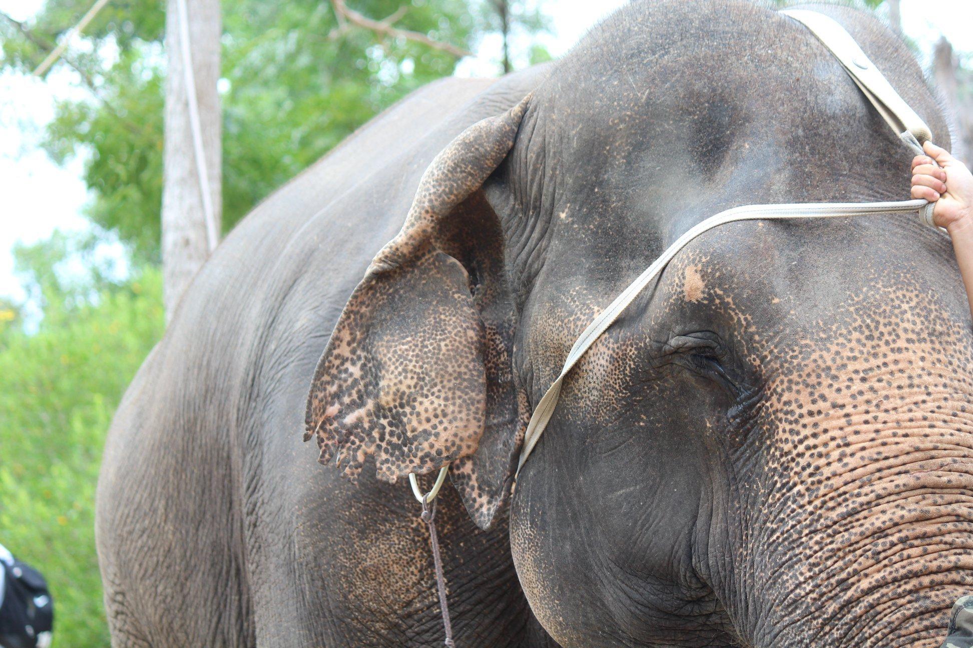 Dân mạng dậy sóng trước câu chuyện con voi bị bóc lột trong gánh xiếc tại Nha Trang 8