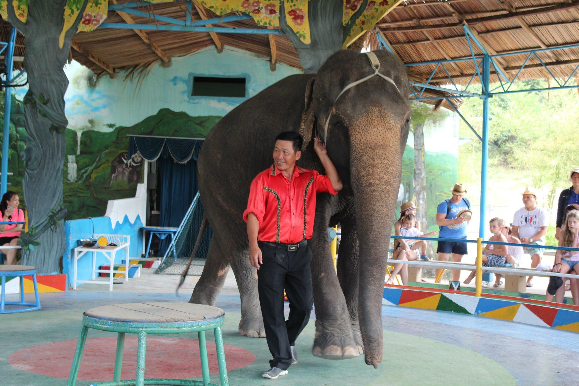 Dân mạng dậy sóng trước câu chuyện con voi bị bóc lột trong gánh xiếc tại Nha Trang 3